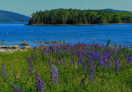 Bar Harbor Acadia Weekly Cottage Rentals